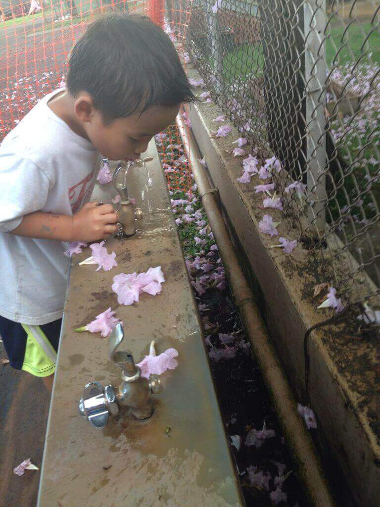 ハワイで大家:プナホウの公園にて。オバマ大統領の通った有名私立校ですが、水飲み場の排水菅などなく、ダラダラ流れ落ちるだけですw。こういうハワイ好きです。笑