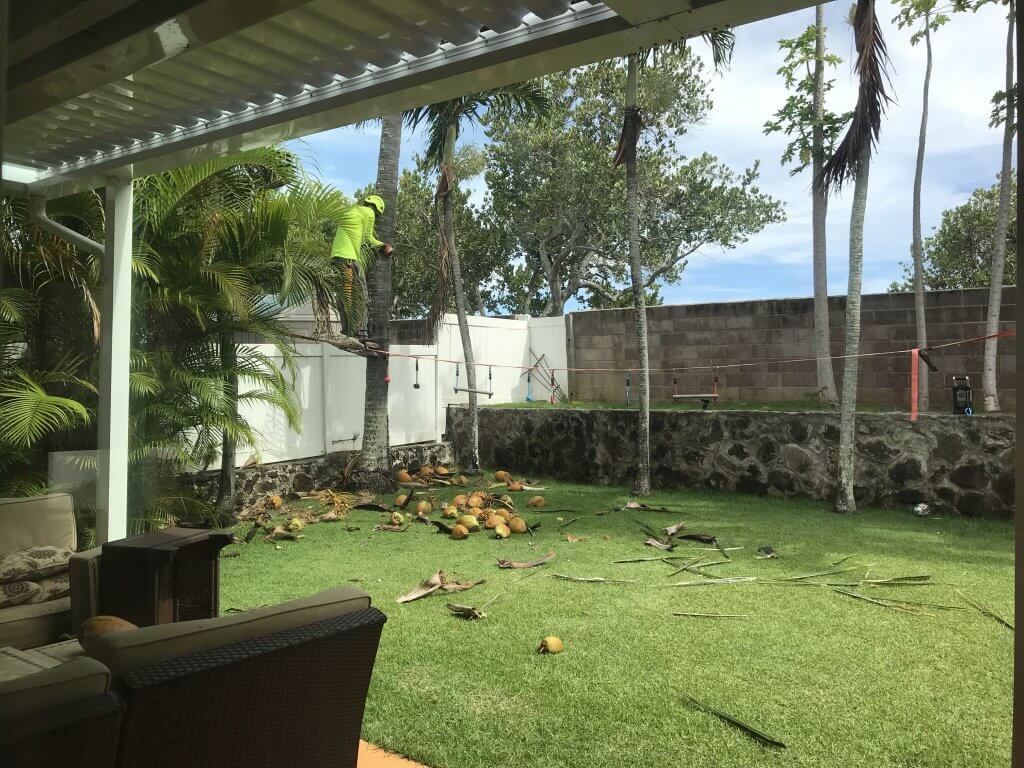 ハワイで大家:やっとココナッツ除去業者がきてくれた。