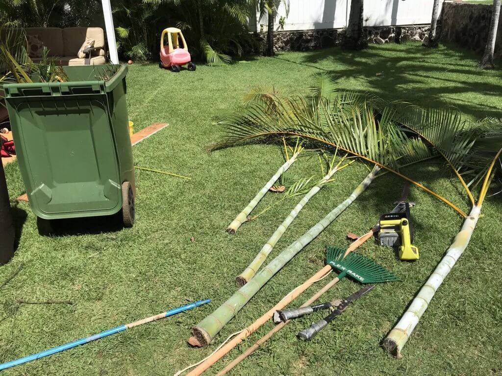 ハワイで大家:剪定作業も一苦労です